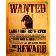 Wanted Labrador Retriever Tin Sign Pet Dog Lovers Poster Comedy Humor
